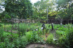 Community vegetable garden. Panorama of Community vegetable garden at Yale University, taken in New Haven, CT, USA stock photo