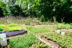 Community vegetable garden. Panorama of Community vegetable garden at Yale University, taken in New Haven, CT, USA stock photography