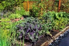 Community vegetable garden Royalty Free Stock Photography