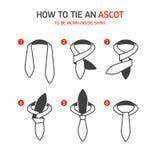 Como amarrar Ascot ilustração stock