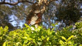Como a borboleta greenary e com bonita fotos de stock royalty free