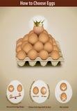 Como escolher ovos Imagem de Stock