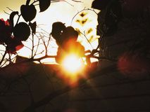Como forte é o sol? imagens de stock
