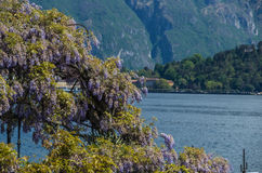 Como. Lake Como in Italy beautiful scenery surrounded by snow capped mountains Royalty Free Stock Photos