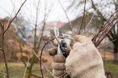 Como se importar corretamente com árvores e aparar os ramos com tesouras do jardim fotografia de stock royalty free