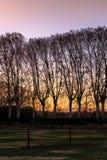 Como soldados do exército, as árvores são alinhadas que olham o por do sol Fotografia de Stock Royalty Free