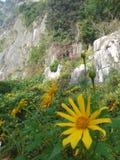 Como una flor del sol Fotos de archivo