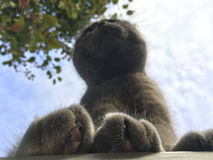 Como ver grandes gatos peludos das patas, inseto Fotografia de Stock