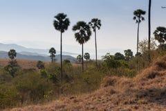Comodo landscape. Komodo island dragon flores rinca Royalty Free Stock Photography