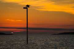 Comorant at Sunset Royalty Free Stock Images