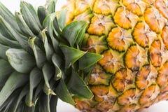 Comosus van de ananasananas Stock Afbeeldingen