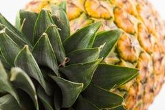 Comosus van de ananasananas Royalty-vrije Stock Foto