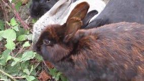 Compañía atractiva brillante de los conejos de conejito jovenes que tienen su comida almacen de metraje de vídeo