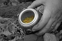 Compañero de Yerba en calabaza Foto de archivo libre de regalías