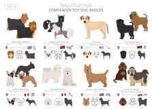 Compañero y colección miniatura de los perros de juguete aislados en blanco Estilo plano Diverso color y país de origen stock de ilustración