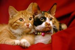 Compañeros del gatito Imagen de archivo
