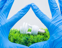 Compact fluorescence on green artificial grass. And hands Royalty Free Stock Image