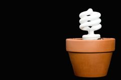A compact fluorescent bulb in a planter Royalty Free Stock Photos