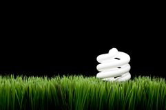 Compact fluorescent light bulb on grass Stock Images