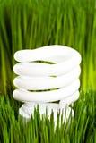 Compact Fluorescent Lightbulb Royalty Free Stock Photo