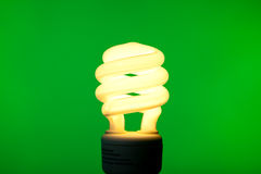 Compact Flurescent Buld on Green Background Stock Photo