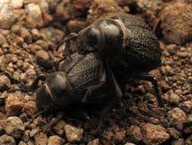 Compagno dell'insetto fotografia stock