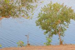 Compagnon à l'environnement Photo stock