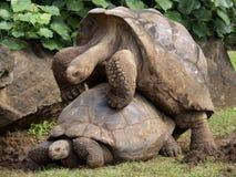 Compagnons de Galapagos Image stock