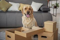 Companheiro animal contente que localiza perto dos pacotes abertos imagem de stock royalty free