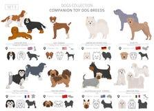 Companheiro e coleção diminuta dos cães de brinquedo isolados no branco Estilo liso Cor diferente e país de origem ilustração stock