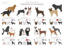 Companheiro e coleção diminuta dos cães de brinquedo isolados no branco Estilo liso Cor diferente e país de origem ilustração royalty free