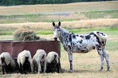 Companheiros da agricultura Imagem de Stock Royalty Free