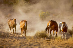 Companheiros do cavalo fotografia de stock