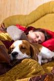 Companion stock photos