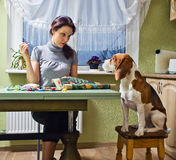 Companion. The dog looks as the mistress embroiders royalty free stock image
