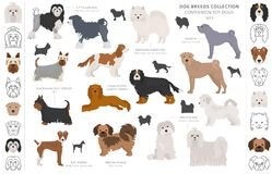 Free Companion And Miniature Toy Dogs Collection Isolated On White. Flat Style. Different Color And Country Of Origin Royalty Free Stock Photo - 164207175