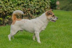 Companion Animals - Dogs Stock Photos