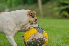 Companion Animals - Dogs Royalty Free Stock Photo