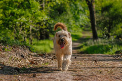 Companion Animals - Dogs Royalty Free Stock Image