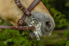 Companion Animals - Horses Stock Images