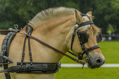 Companion Animals - Horses Stock Photography