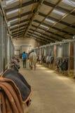 Companion Animals - Horses. Interior of the corridor with horse stables of a riding school Stock Photos