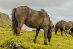 Companion Animals - Horses Stock Photography