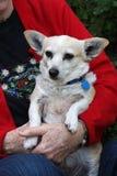 Senior lady holding Dog Companion Pet Stock Image