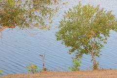Companion to the environment. Green tree and water of river in forest best companion to the environment. this place at banswara, rajasthan, India. this stock photo