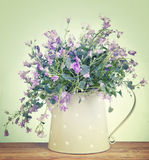 Companula Blumen in wässernnocken Lizenzfreies Stockbild