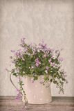 Companula flowers in watering cam royalty free stock photos