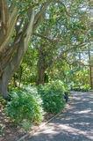 Company Garden, Cape Town Royalty Free Stock Photography