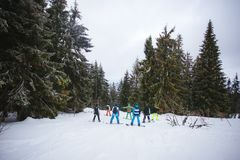 Company of snowboarders among the forest in the mountains. Company of snowboarders among the forest in the mountains Stock Image