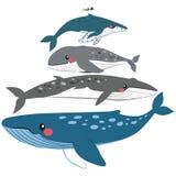 Comparação da escala da baleia Fotos de Stock